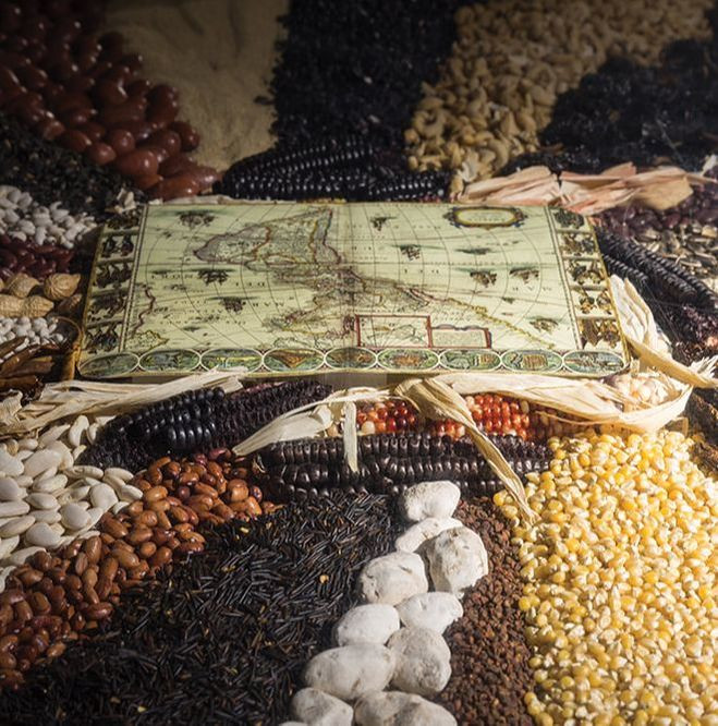 Trans/mission: Barley-Corn-Maize An installation by Ron Benner