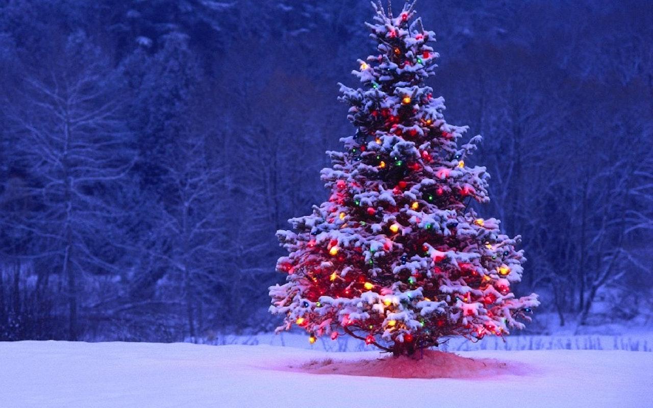Hockley Valley Trees - U Cut Christmas Trees