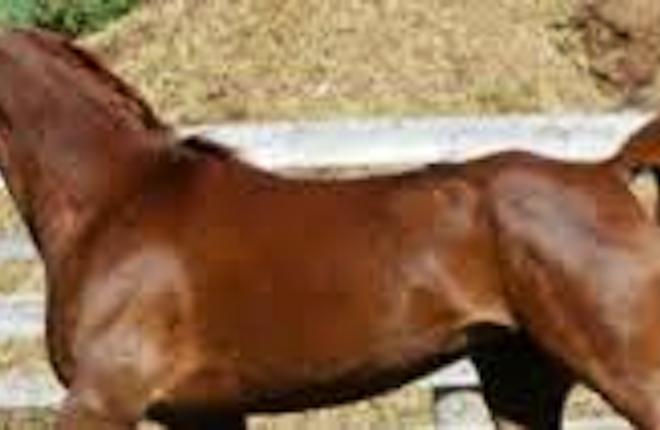 The Meadows Equestrian Centre